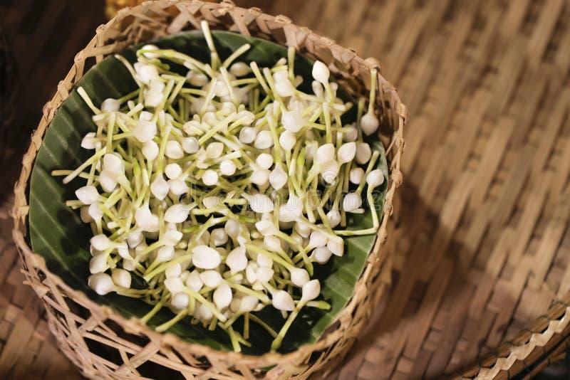 Jaśmin w koszykowym, Arabskim jaśminie, kwitnie dla handmade girlandy, Jaśminowy materiał dla handmade girlandy fotografia stock