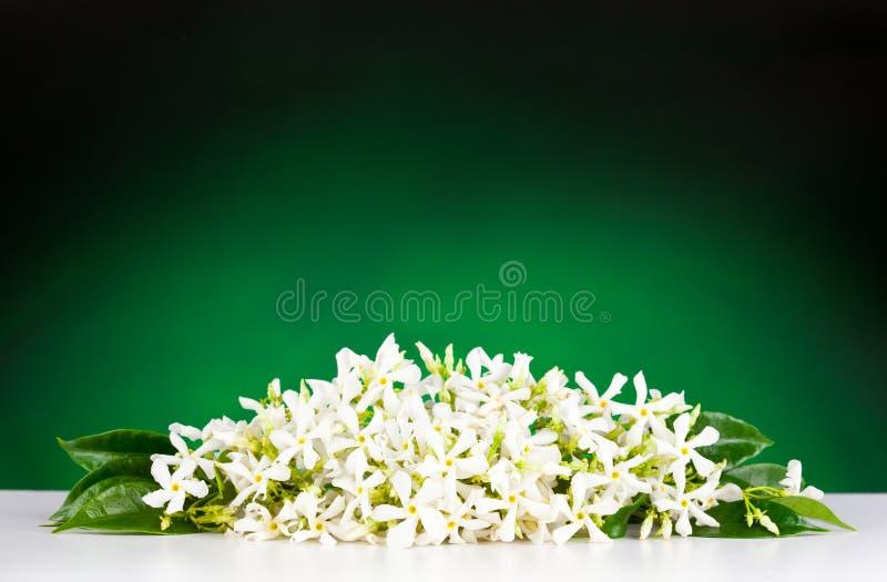Jaśminowi kwiaty zdjęcie stock