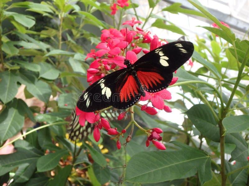 Jaśnieje Mój dnia motyla fotografia royalty free