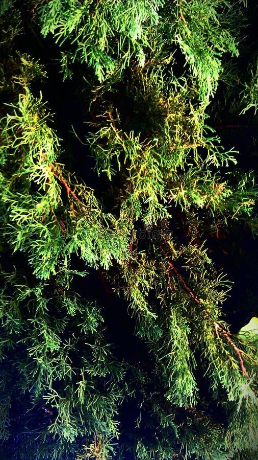 Ja! Dit is een toekomstige reuzekerstmisboom stock foto's