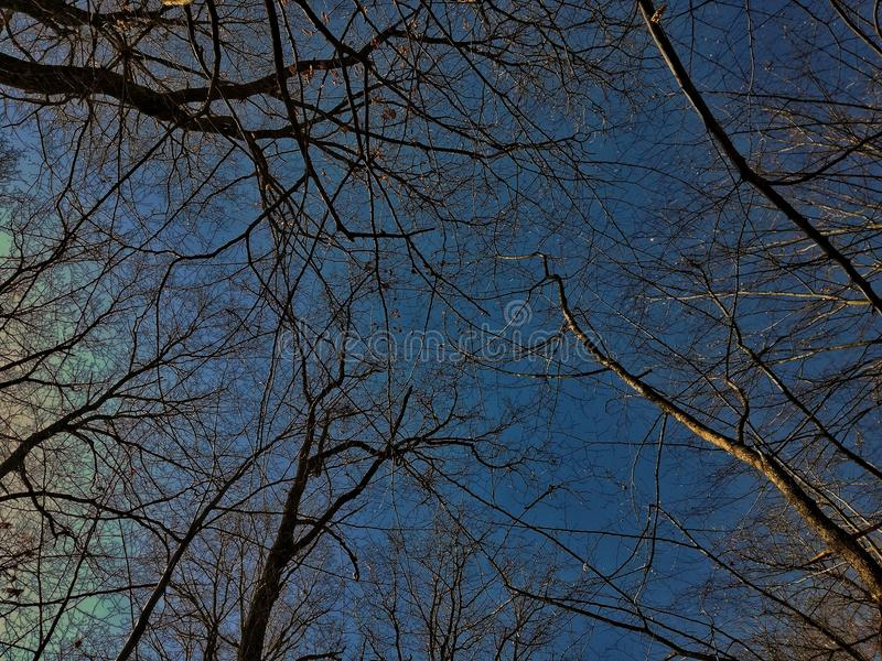 Ja ` s spojrzenie jak natura jest nieżywy ale ja, ` s budzić zdjęcie stock