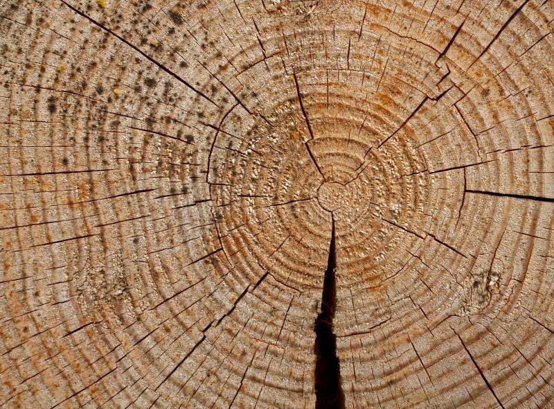 Jaarringen op verminderd de bomen stock fotografie
