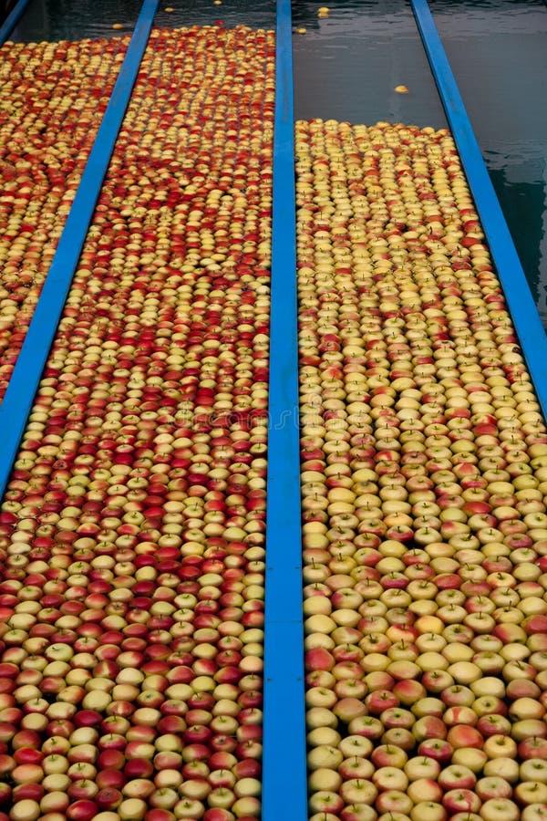 jabłczana produkcja zdjęcia stock