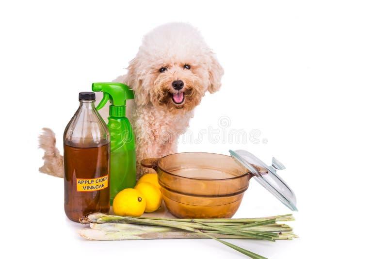 Jabłczanego cydru ocet, cytryna, lemongrass pchły wydajny repellent obraz stock