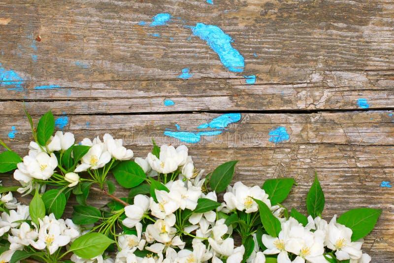 jabłczanego okwitnięcia stary nawierzchniowy drewniany zdjęcia stock