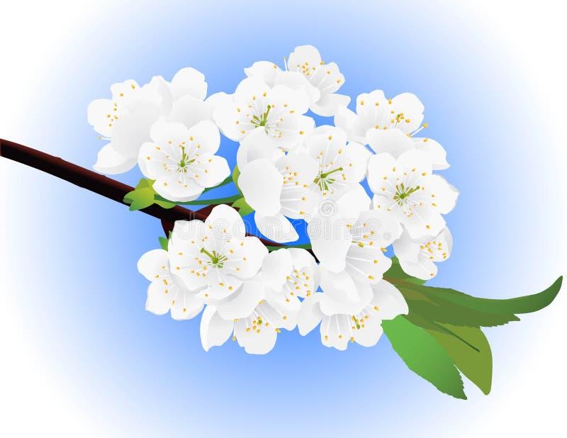 Download Jabłczanej Wiosna Drzewna Gałązka Ilustracja Wektor - Ilustracja złożonej z wiśnia, gałąź: 13325002