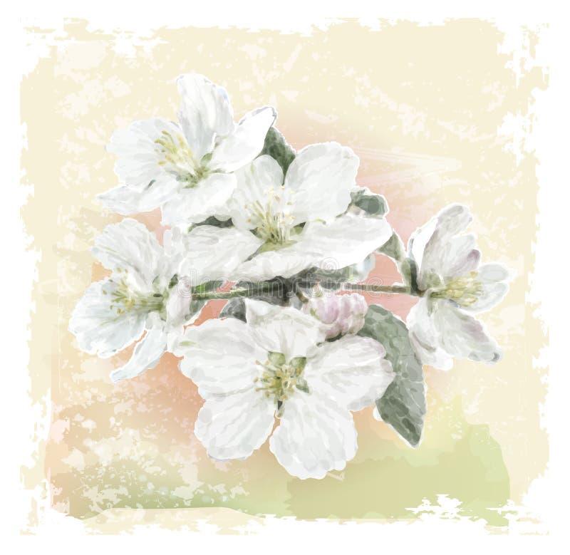 Jabłczani kwiatów okwitnięcia royalty ilustracja