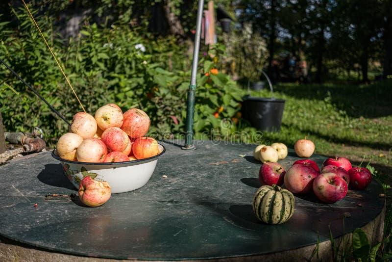 jabłczany żniwo na ziemi w domu na wsi ogródzie zdjęcia royalty free