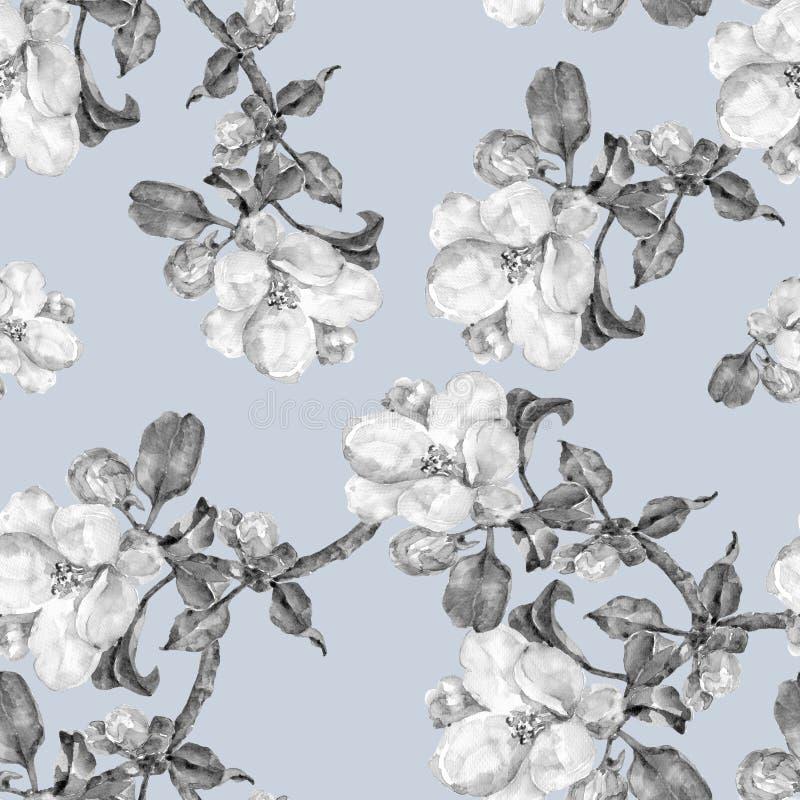Jabłczany kwiat, akwarela, chodak bezszwowy, monochrom ilustracja wektor
