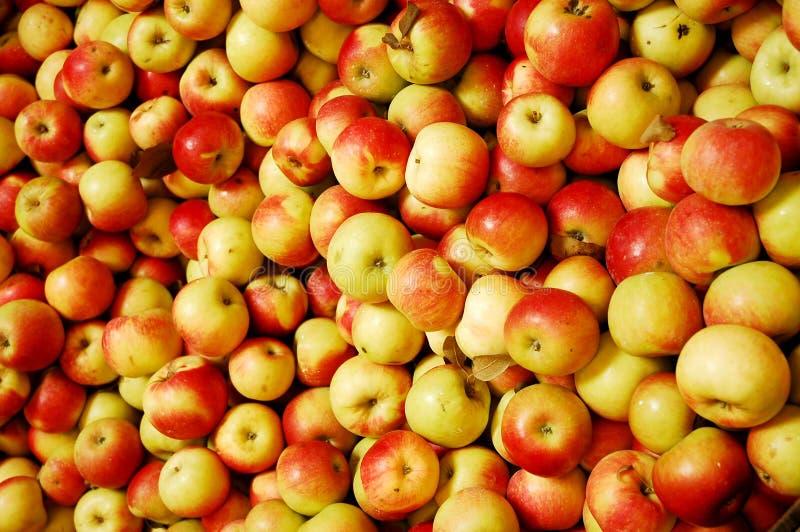 jabłek czerwieni kolor żółty fotografia royalty free