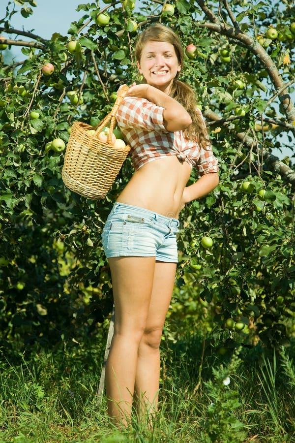 jabłek dziewczyny sadu zrywanie obraz stock