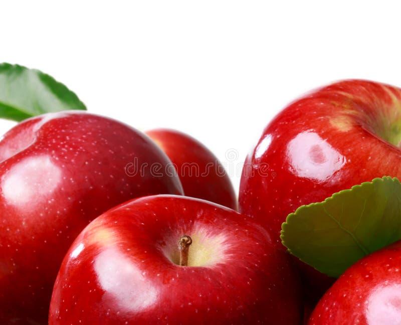 jabłek tła świeży biel obraz royalty free