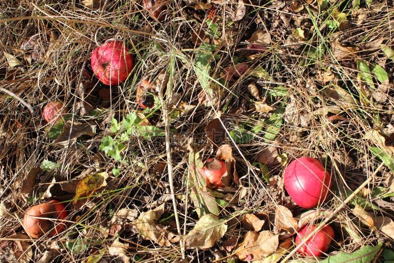 jabłek trawy czerwień zdjęcia stock