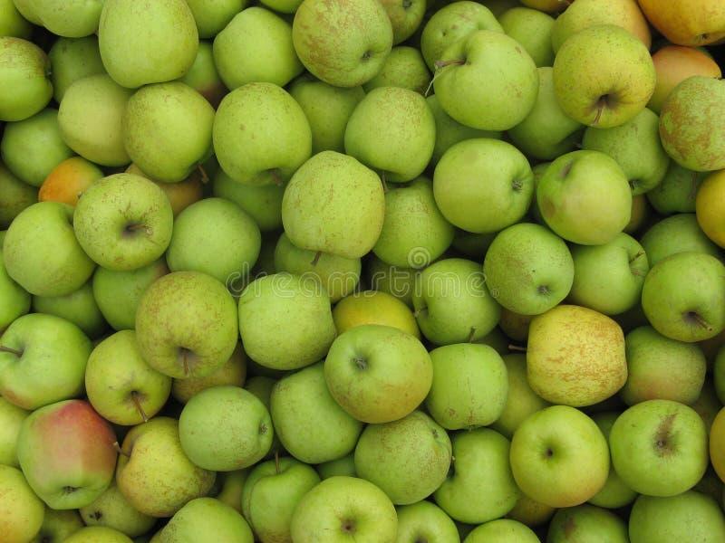 Jabłka żniwo obraz royalty free
