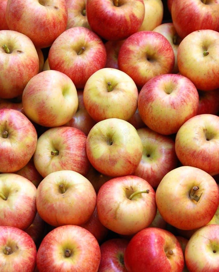 jabłka marketing czerwony fotografia royalty free