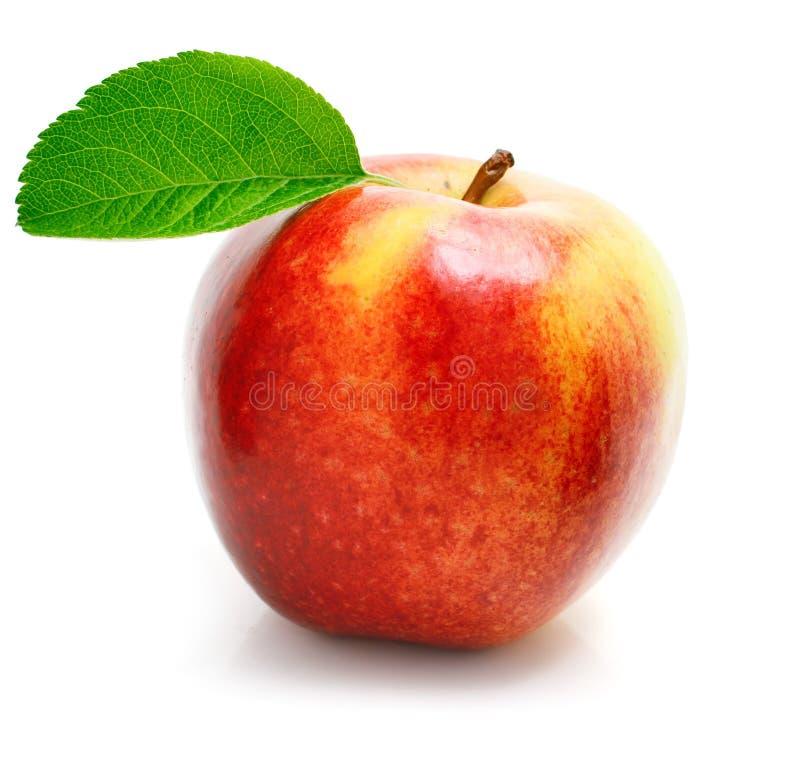 jabłka owoc zieleń opuszczać czerwień obraz stock