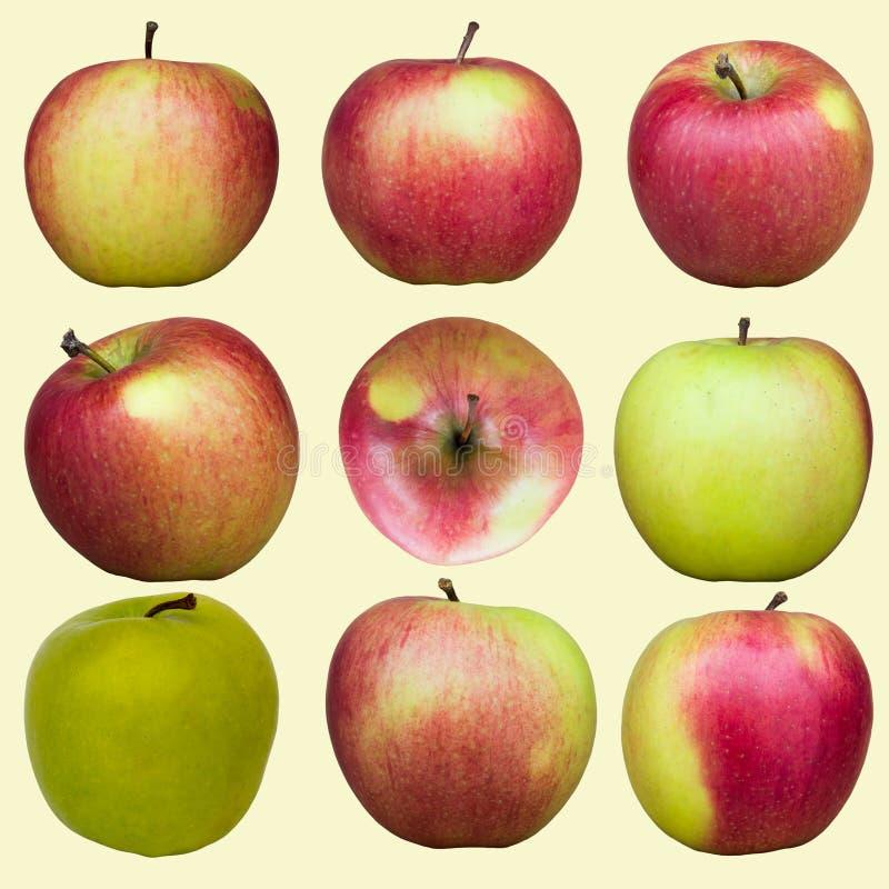 jabłka różni obrazy stock