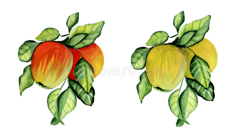 Download Jabłka Rozgałęziają Się Dojrzałego Ilustracja Wektor - Ilustracja złożonej z cukierki, jujitsu: 57668999