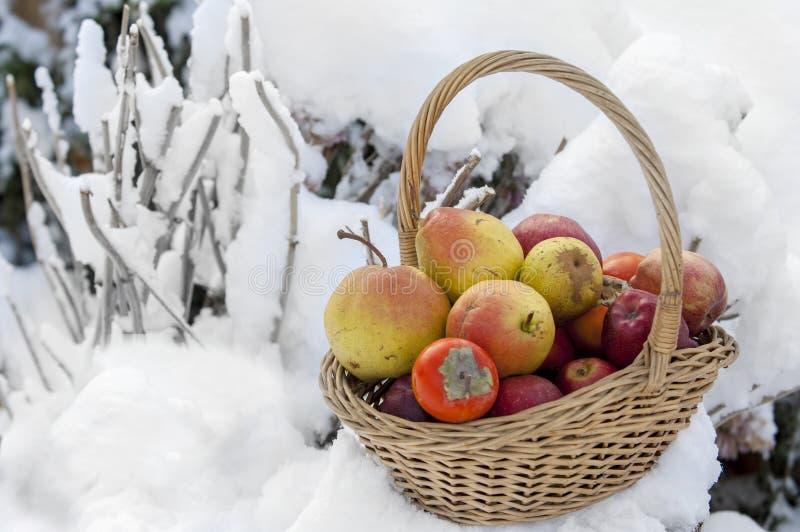 Jabłka w śniegu obraz royalty free