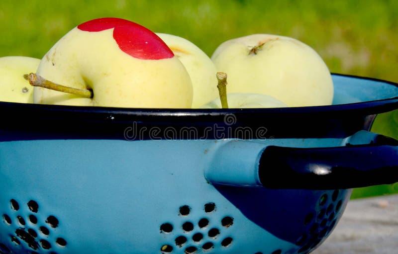 Jabłka w kolendrze obrazy stock