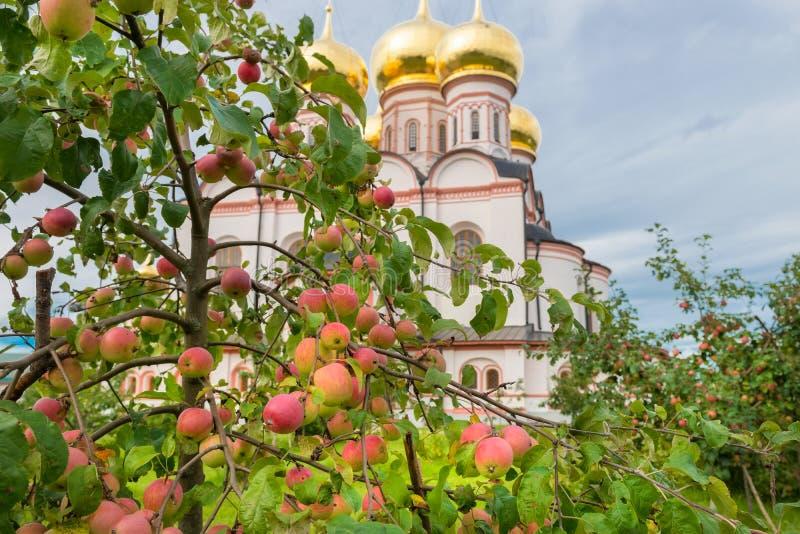 Jabłka w ogródzie obraz stock