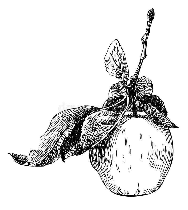 jabłko royalty ilustracja