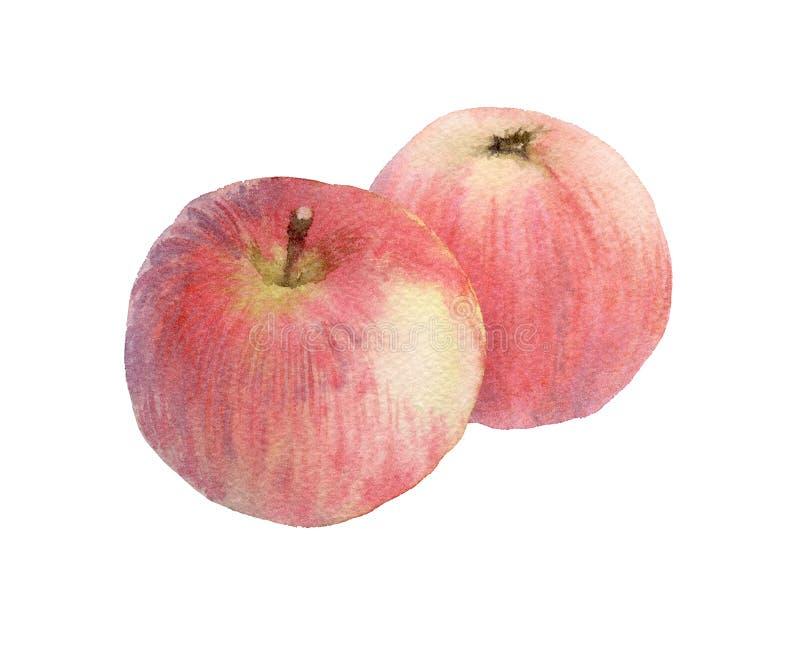 jabłko czerwony 2 ilustracji