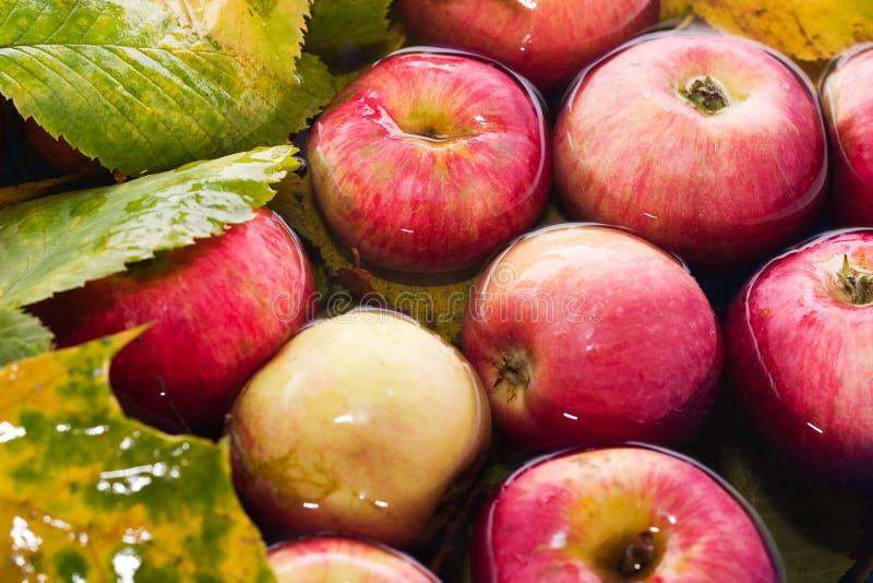 jabłko jesieni zdjęcia royalty free