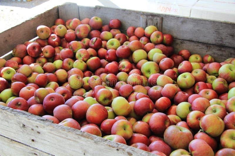 jabłko spadek obrazy stock