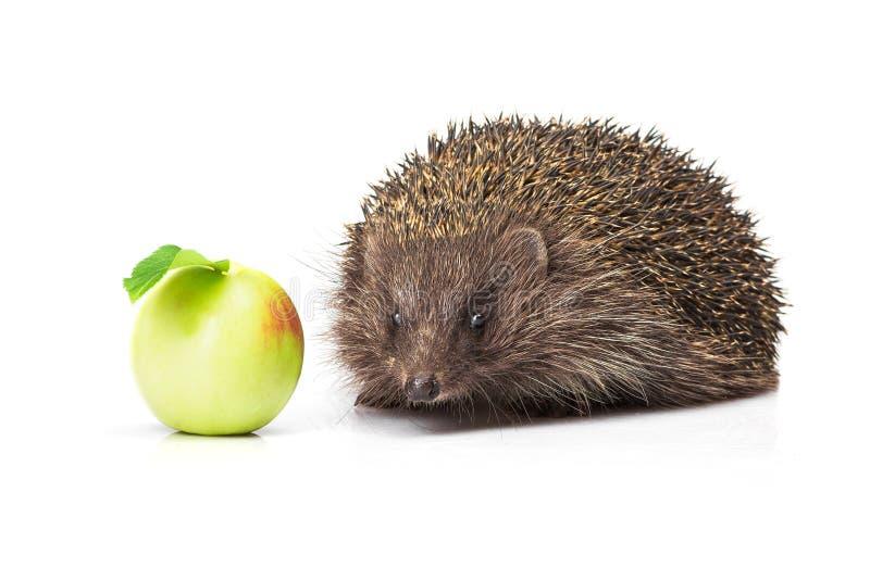 jabłko - zielony jeż fotografia stock