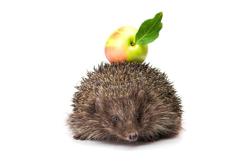 jabłko - zielony jeż zdjęcia royalty free