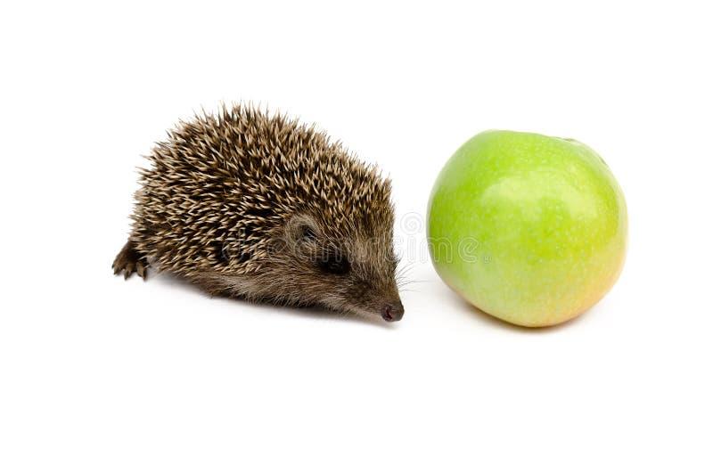 jabłko - zielony jeż fotografia royalty free