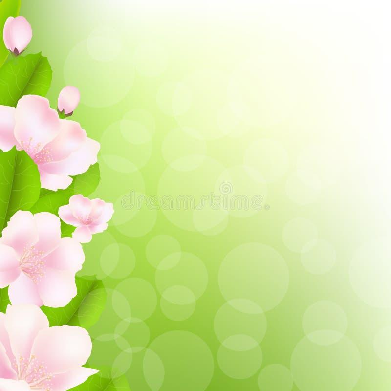 Jabłoń Kwitnie Z Bokeh royalty ilustracja