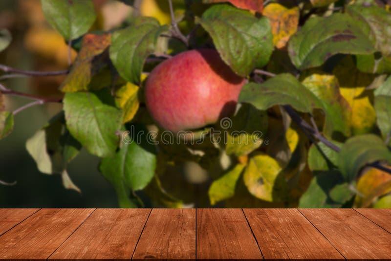 Jabłoń nad starym ciemnym drewnianym stołem lub deską Liście jak natu zdjęcia royalty free