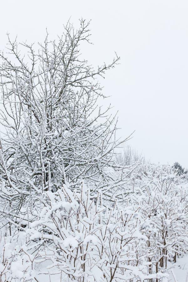 Jabłoń w ogródzie na chmurnym zima dniu fotografia royalty free