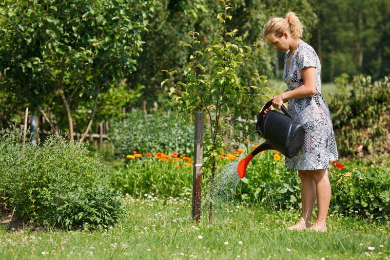 jabłoni podlewania kobieta obraz stock