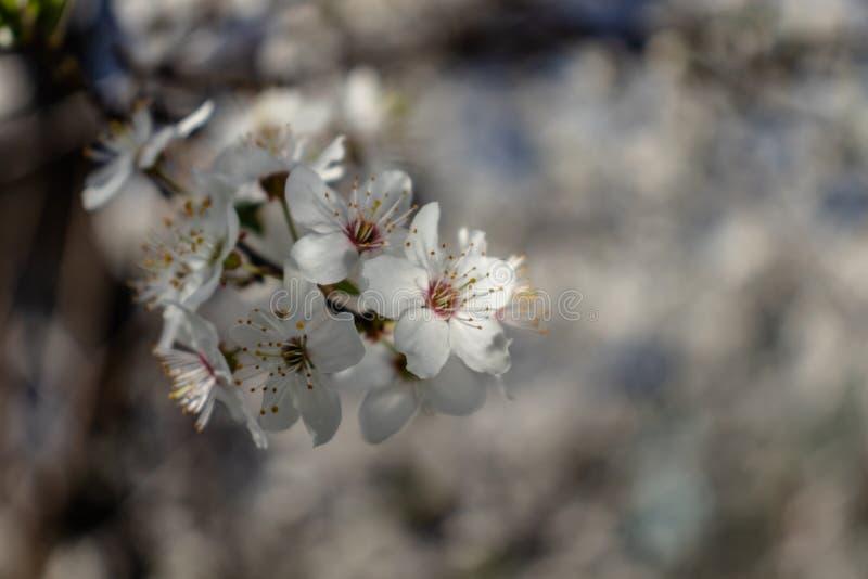 jab?czanych g??bii pola kwiat?w p?ytki drzewo obraz stock
