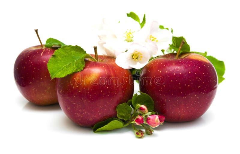 Download Jabłka obraz stock. Obraz złożonej z kopiasty, owoc, ludzie - 53785259