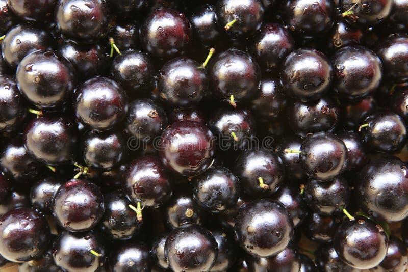 Jaboticaba frukt arkivfoton
