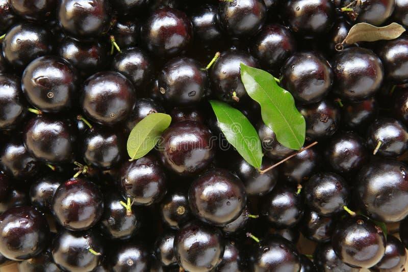 Jaboticaba frukt arkivfoto