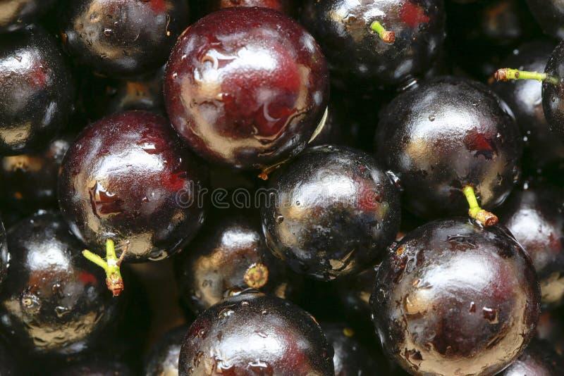 Jaboticabafruit stock afbeeldingen