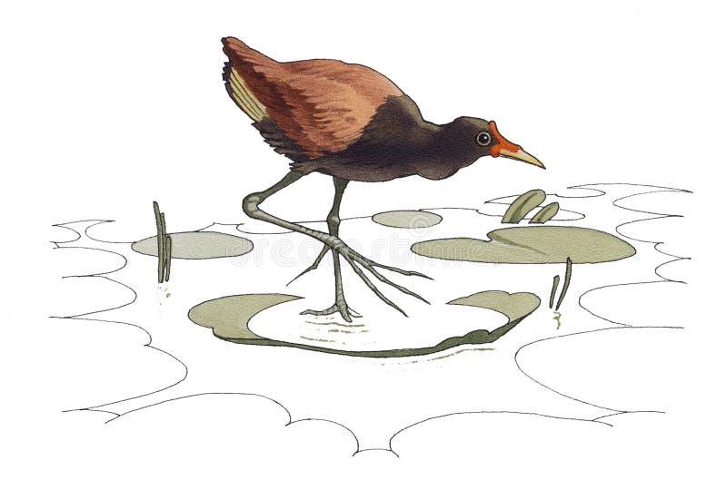 Jacana illustration de vecteur