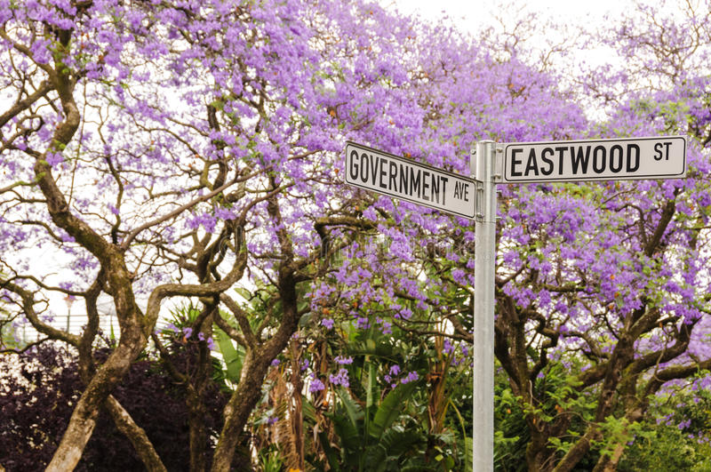 Jacaranda trees in bloom in Pretoria, South Africa. Street sign on the corner of Goverment and Eastwood street in Pretoria (Tswane), South Africa with Jacaranda stock images