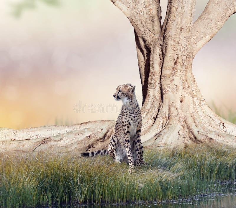 Jachtluipaard die dichtbij een grote boom rusten royalty-vrije stock afbeelding