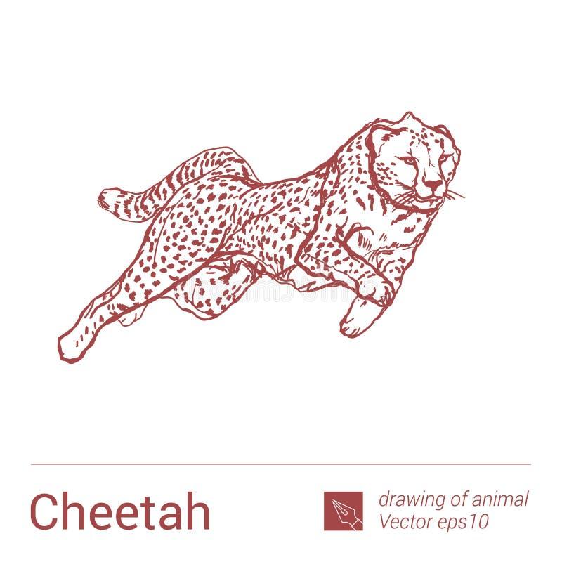 Jachtluipaard, het trekken van dieren, vectore royalty-vrije illustratie