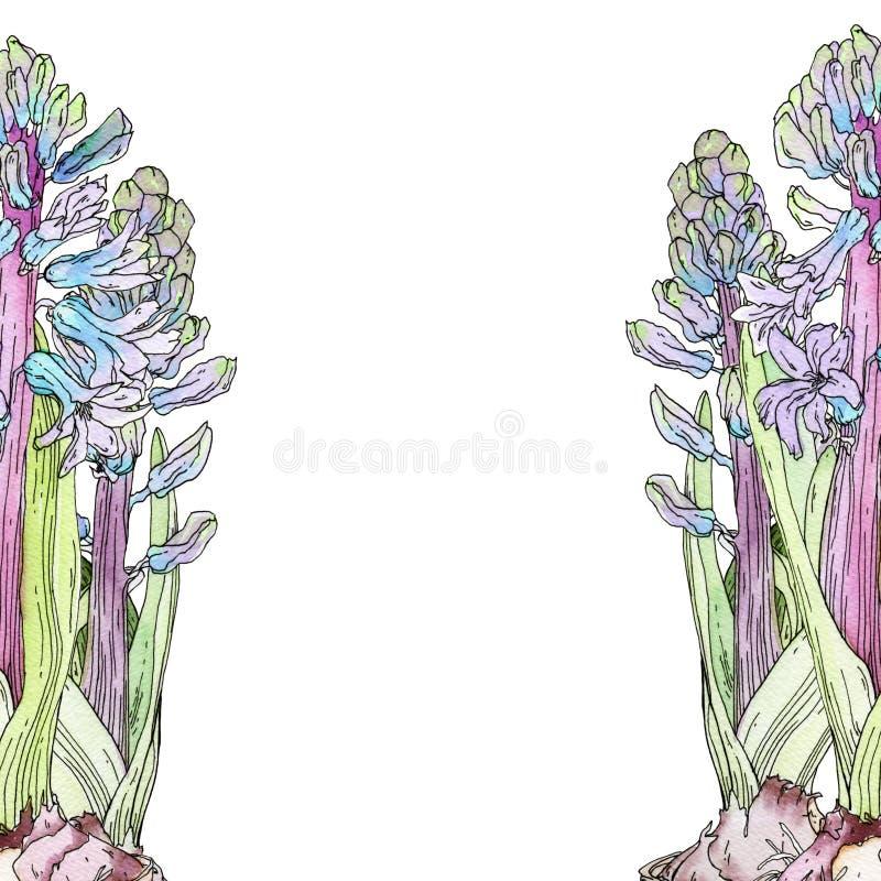Jacinthes bleues pour le fond photographie stock