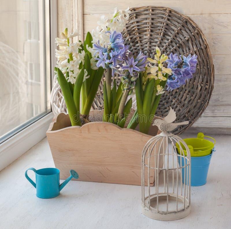Jacinthes dans des boîtes de fleur sur le décor de vintage de fenêtre image libre de droits
