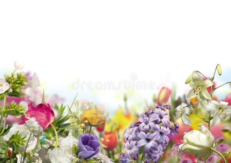 Jacinto azul, tulipanes blancos y liliums con las flores coloreadas defocused en jardín horizontal de la primavera con el fondo b imágenes de archivo libres de regalías