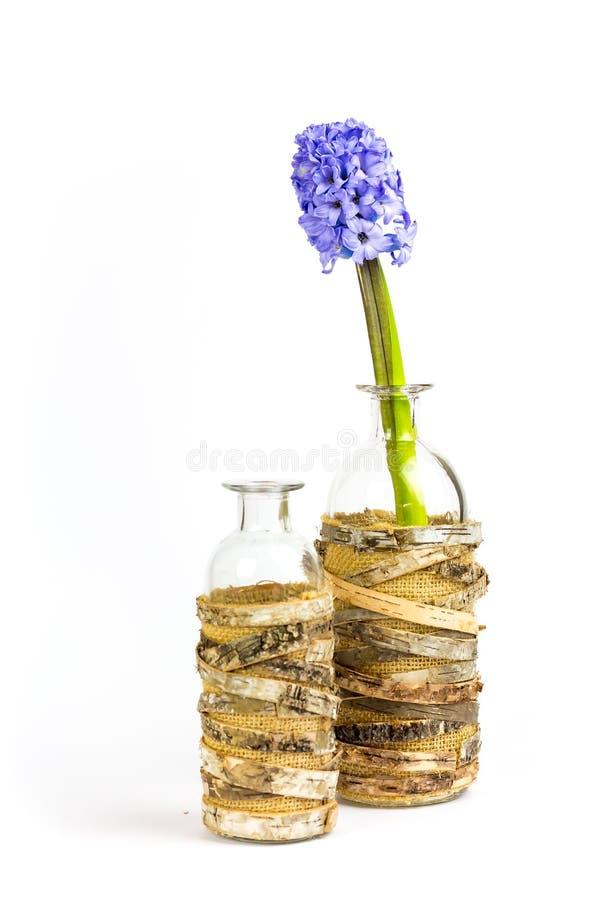 Jacintos decorativos, roxos em uma garrafa na frente do backg branco fotos de stock
