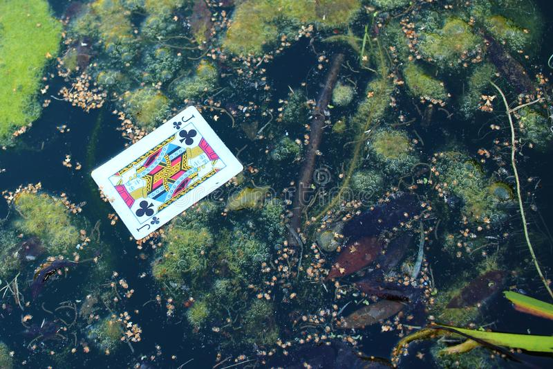 Jack των λεσχών στη λίμνη - έννοια εθισμού στοκ εικόνες